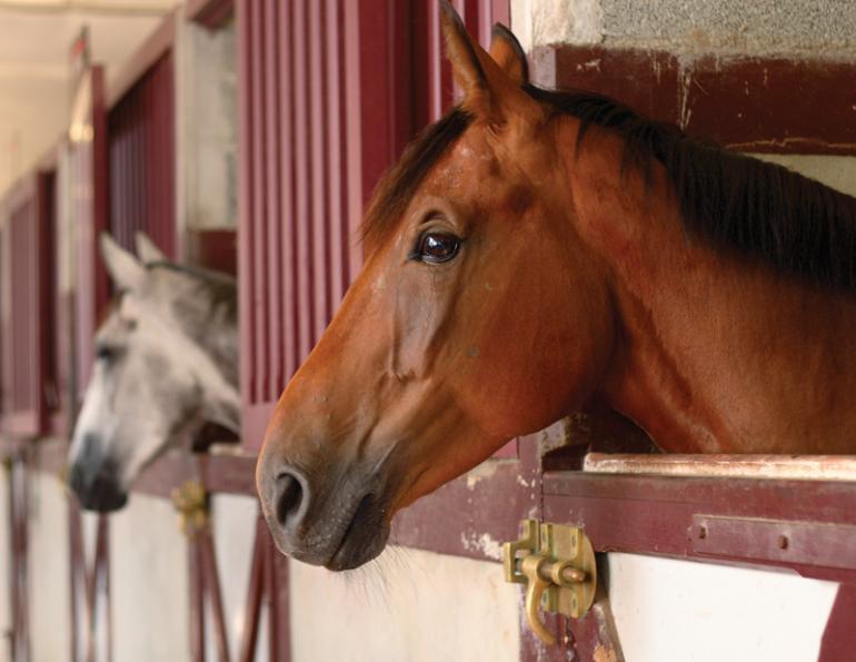 Attrezzatura Accessori Scuderia Cavalli E Paddock Equitazione