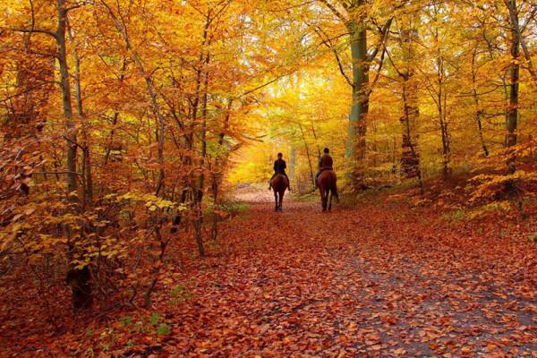Escursioni a cavallo in autunno: perché fanno bene