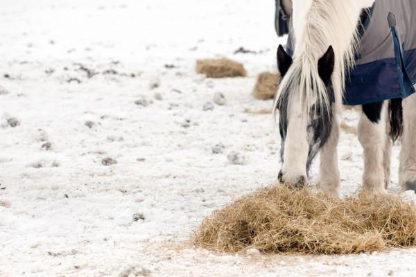 Cavalli e Burian: consigli per difenderli dal gelo