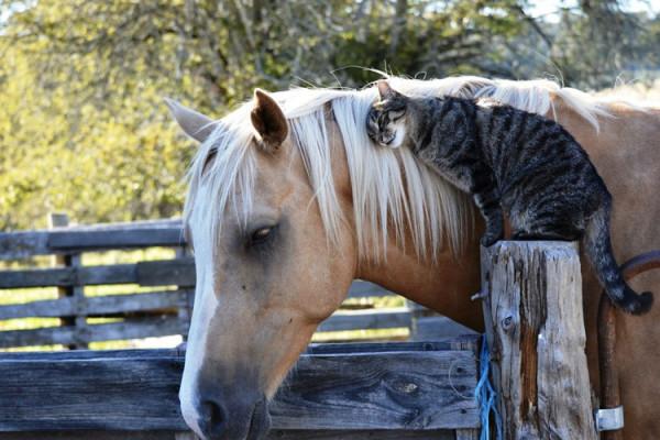 Vita da scuderia: cani e gatti sono gli amici giusti del tuo cavallo