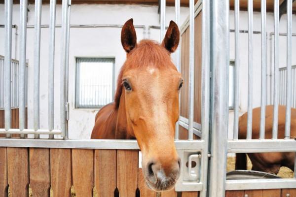 Il cavallo in inverno: 7 rimedi contro la noia