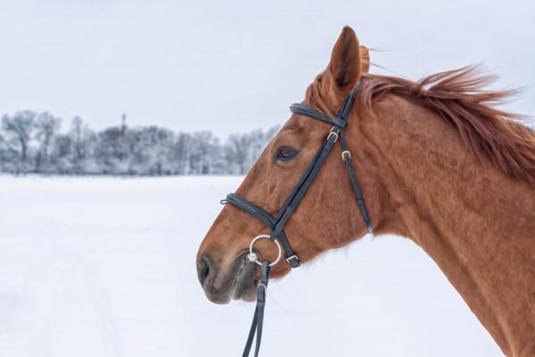 10 errori da evitare nella cura invernale del cavallo