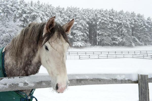 Come prenderti cura del cavallo anziano in inverno