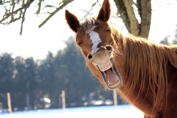 L'equitazione è solo per i ricchi? 9 miti da sfatare sui cavalli