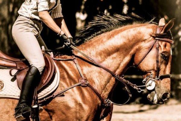 Pratica a cavallo: migliora la tua postura in sella
