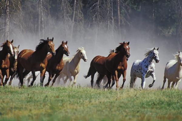 Comportamento equino e psicologia: le priorità dei cavalli